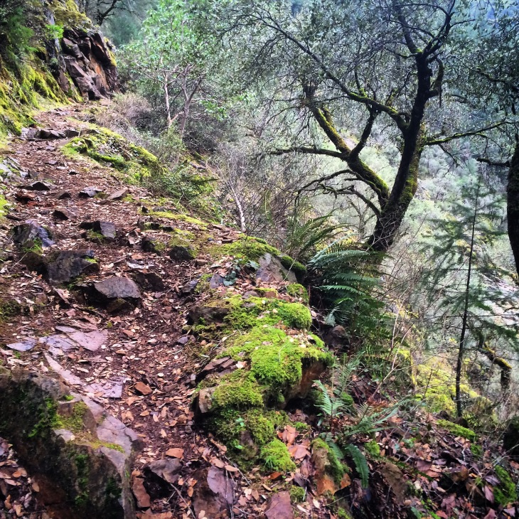 I did get out to explore the South Yuba River on a trail that reminds me of an enchanted fantasy tale.